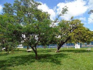Parque Lucio Costa (Foto: Fernando Dias)
