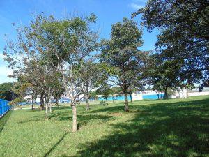 Bosque Israel Pinheiro (Foto: Fernando Dias)